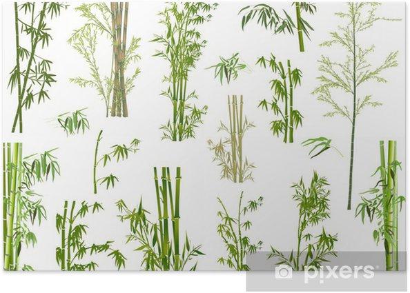 Plakat Izolowane duży zestaw zielonych gałęzi bambusa - Rośliny