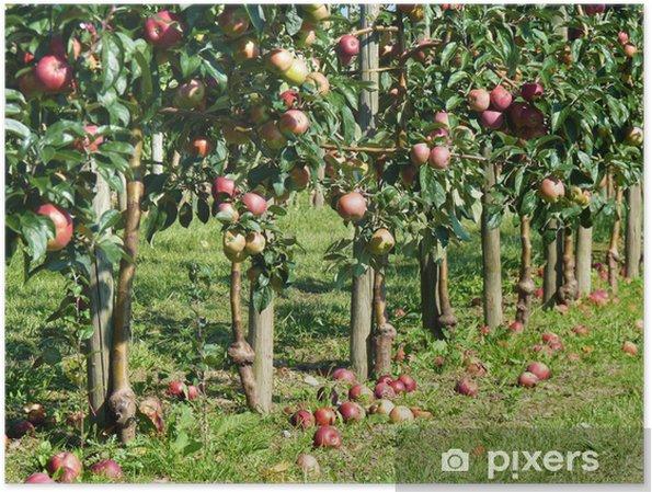 Plakat Jabłka nadzwyczajne - Rolnictwo