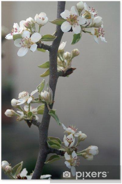 Plakát Jablko květ - Domov a zahrada