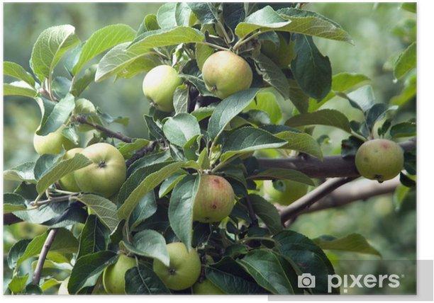 Plakat Jabłoń - Drzewa