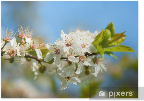 Plakát Jabloňový květ - Stromy