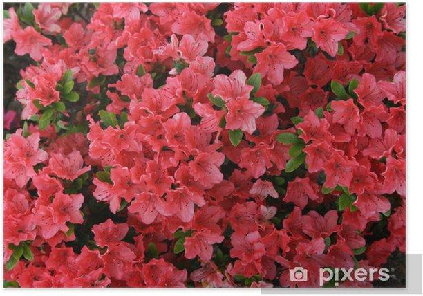 Plakat Japanische Azalee - Kwiaty