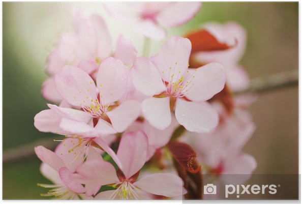 Plakát Jarní sakura - Roční období