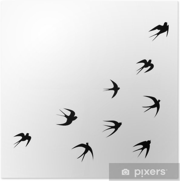 Plakat Jaskółki Sylwetka Wektor Szablon Tatuaż Pixers żyjemy By