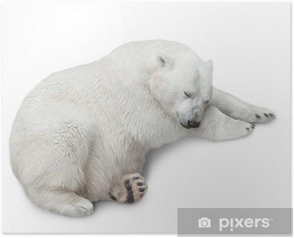 Plakat Jeden niedźwiedź polarny - Ssaki