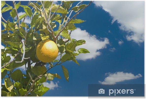 Plakát Jeden oranžový proti krásné modré obloze - Stromy