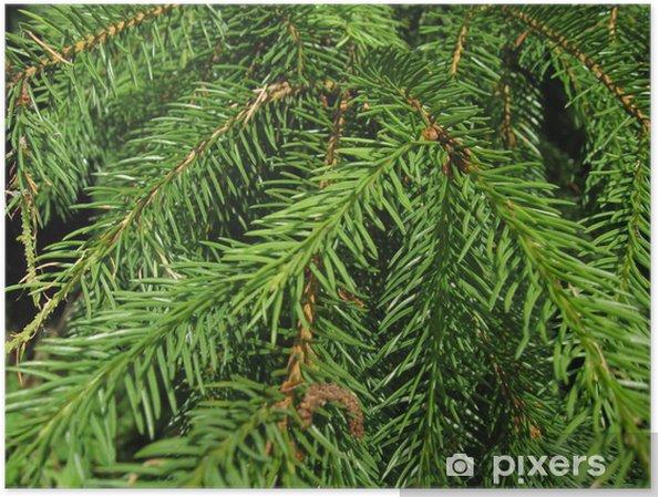 Plakát Jehličí - Stromy
