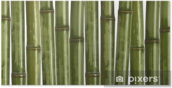 Plakát Jemné obrázek různých bambusu, přírodní pozadí - Rostliny