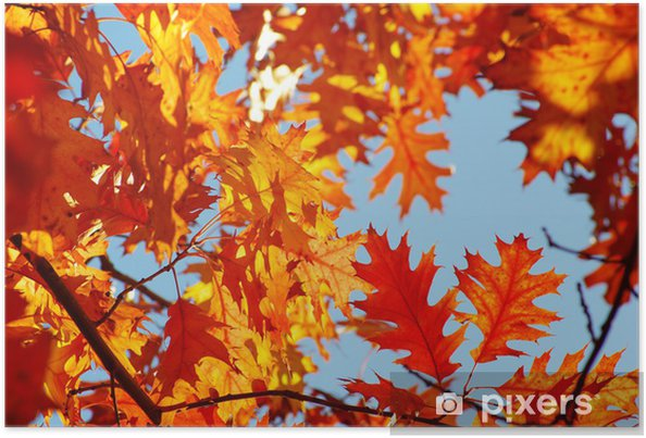 Plakat Jesienne liście - Tematy