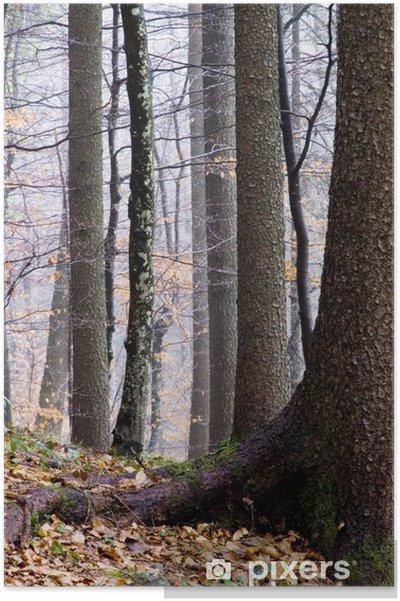 Plakat Jesienny las - Drzewa