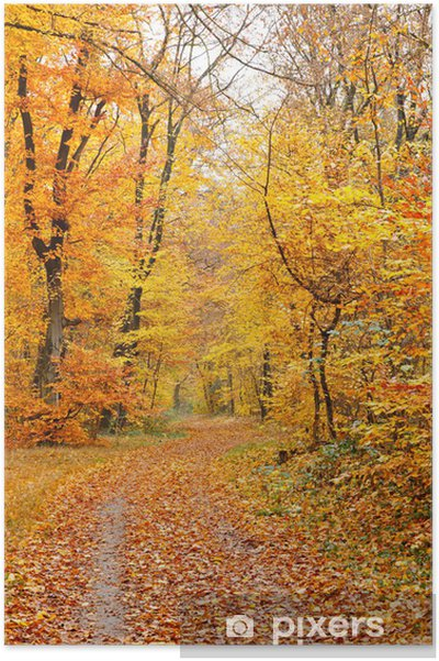 Plakat Jesienny las - Pory roku