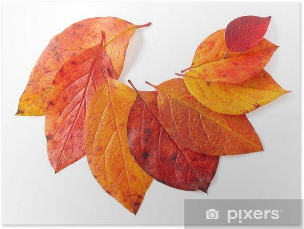 Plakat Jesiennych liści - Pory roku