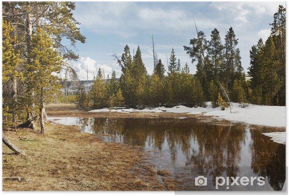 Plakat Jezioro w lesie - Lasy