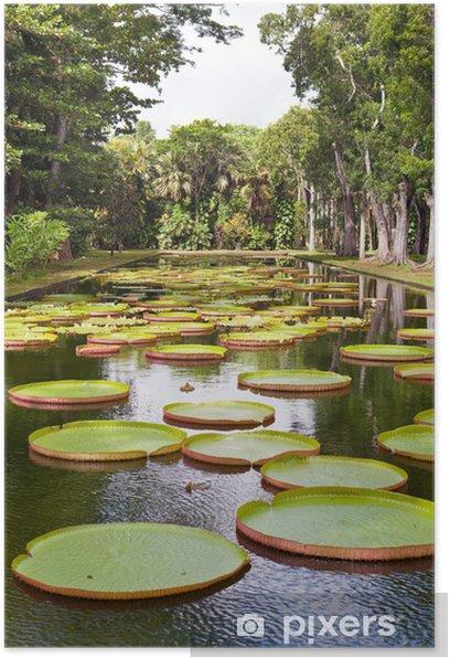 Plakat Jezioro w parku z Victoria, Victoria regia amazonica. - Afryka