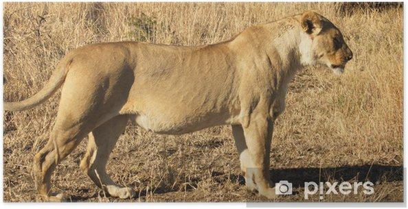 Plakát Jihoafrický Lion - Témata