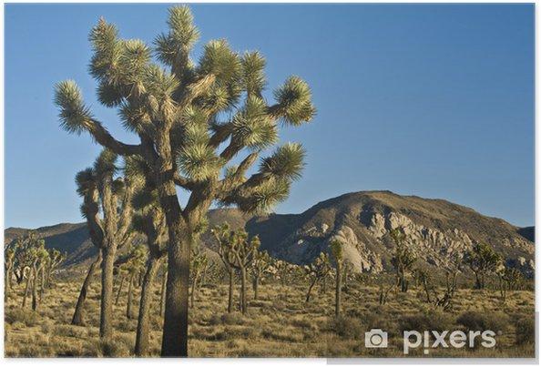 Plakat Joshua drzew - Pustynie