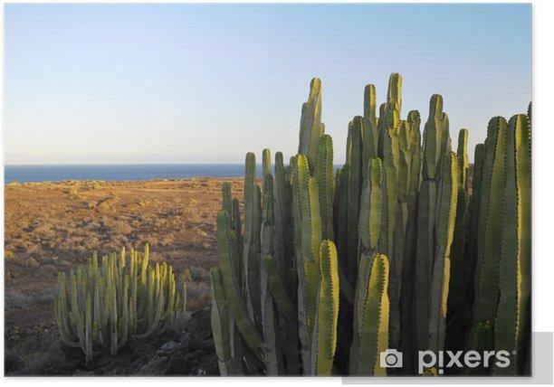 Plakat Kaktus soczysty roślina na suchej pustyni - Ludzie