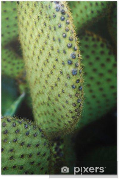 Plakat Kaktus - Kwiaty