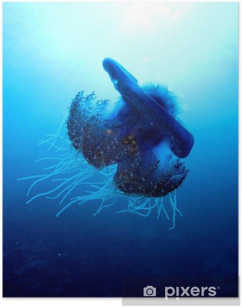Plakat Kalafior meduzy - Cephea cephea - Zwierzęta żyjące pod wodą