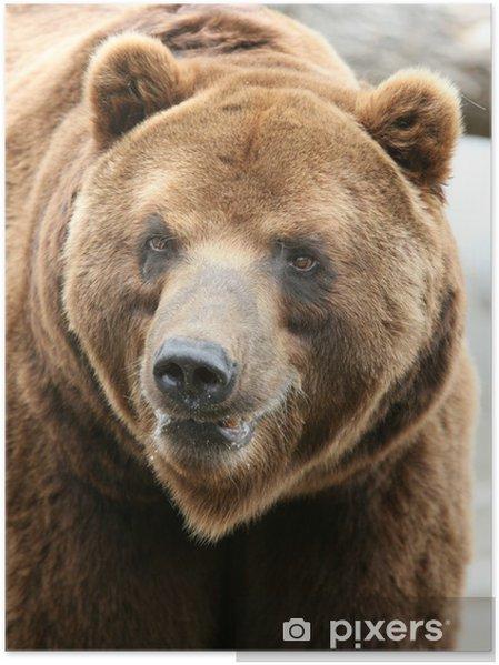 Plakat Kamczatka Brown Bear - Ssaki