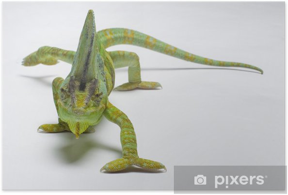 Plakat Kameleon - Tematy
