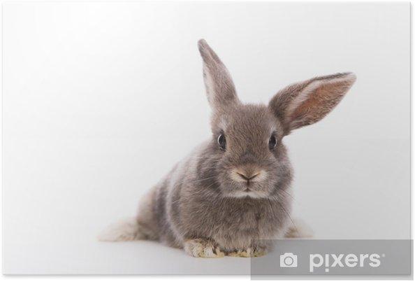 Plakat Kaninchen - Króliki