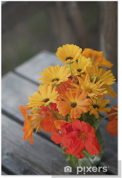 Plakát Kapuzinerkresse - Květiny