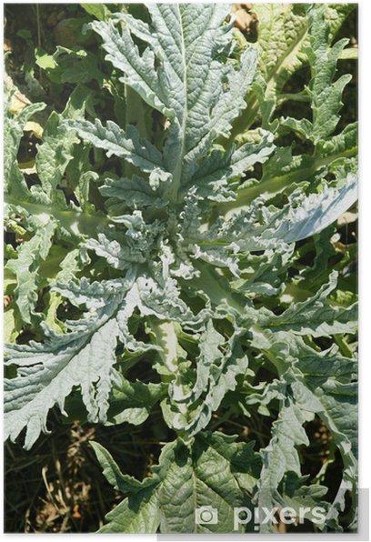 Plakat Karczoch roślin w słoneczny letni dziedzinie - Rolnictwo