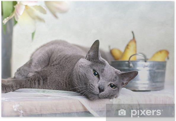 Plakát Katze auf Tisch - Savci