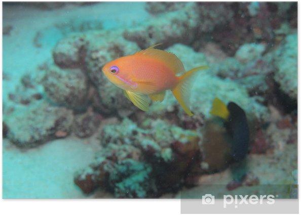 Plakat Kingyohanadai - Zwierzęta żyjące pod wodą