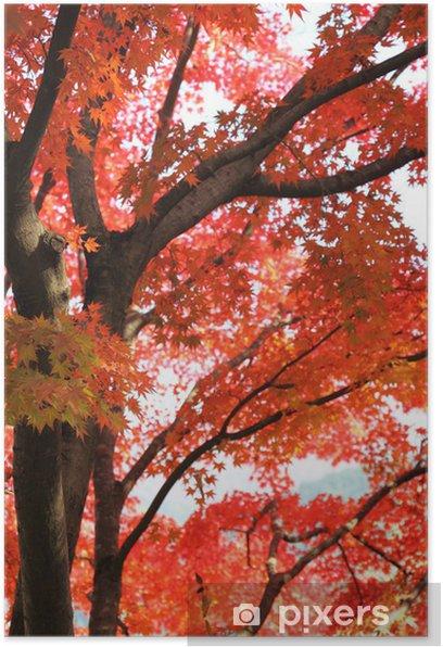Plakat Klon japoński jesienią - Pory roku