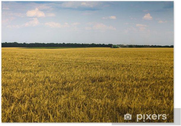 Plakat Kłosy pszenicy - Rolnictwo