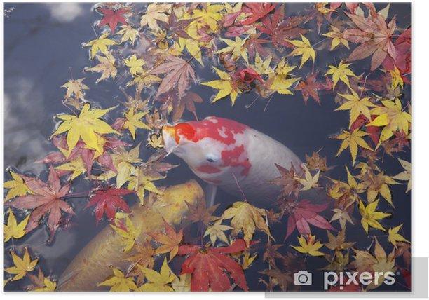 Plakat Koi - Pory roku