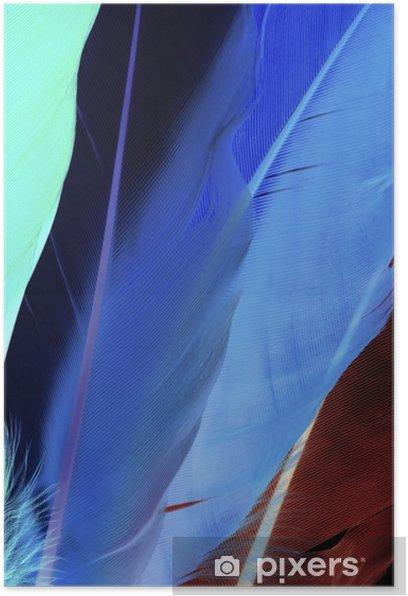Plakat Kolorowe pióra - Zwierzęta