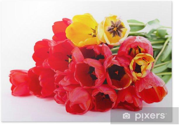 Plakat Kolorowe tulipany na białym tle - Kwiaty