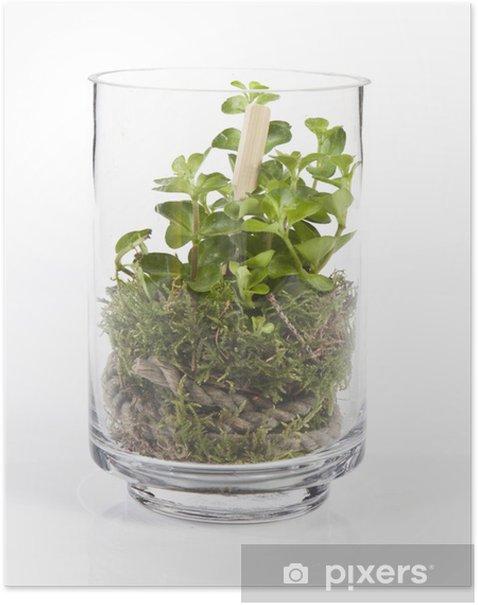 Plakat Kompozycja z roślin w słoiku - Rośliny