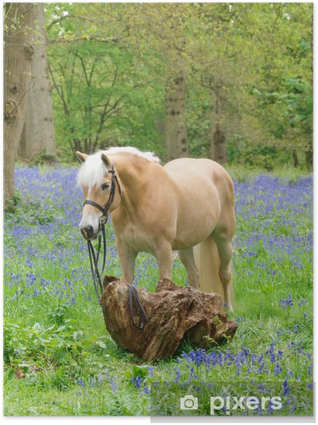 Plakat Koń w dzwonki - Ssaki