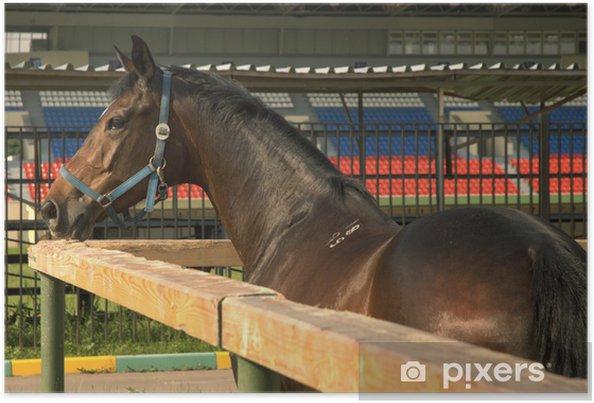 Plakat Koń w zagrodzie - Ssaki