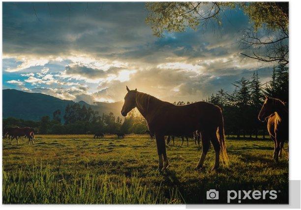 Plakat Koń zachodu słońca - Krajobrazy