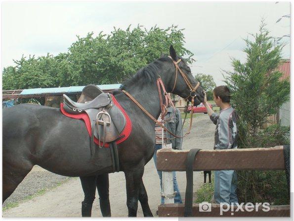 Plakat Koń - Ssaki