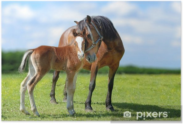 Plakat Koń - Tematy