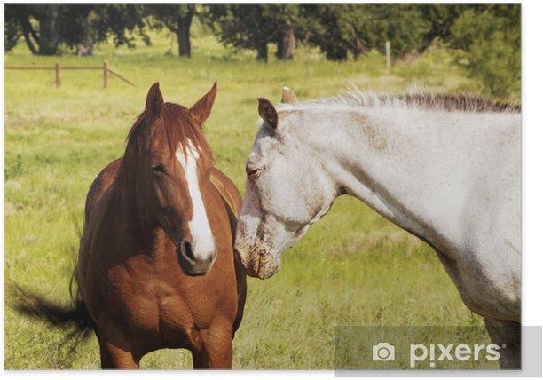 Plakát Koně - Savci