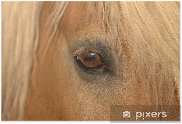 Plakat Koni - jazda oczu - Ssaki