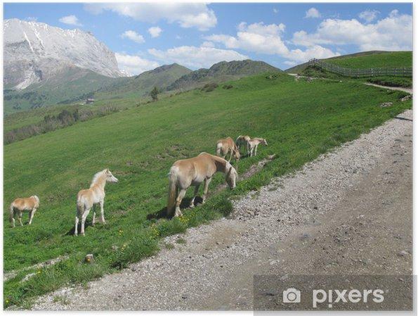 Plakat Konie w Alpach Dolomitach - Europa