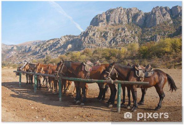 Plakat Konie w poście zaczepu -