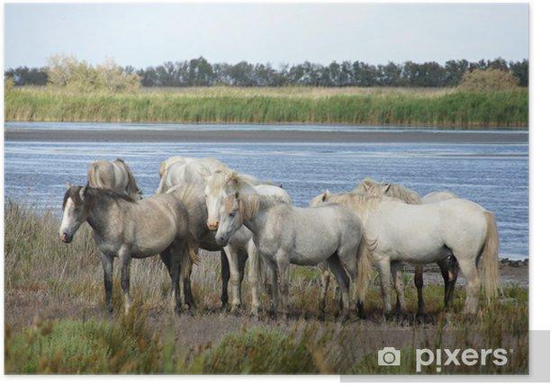 Plakat Konie z Camargue, Francja. - Ptaki