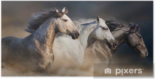 Plakat Konie z długim grzywą portret uruchomić galop w pył pustyni - Zwierzęta