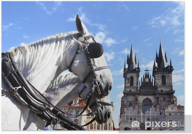 Plakat Konie - Miasta europejskie
