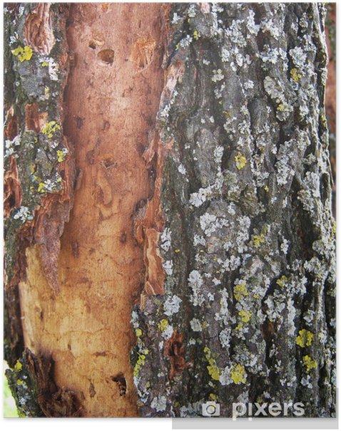 Plakat Kora dębu w tle - Tekstury