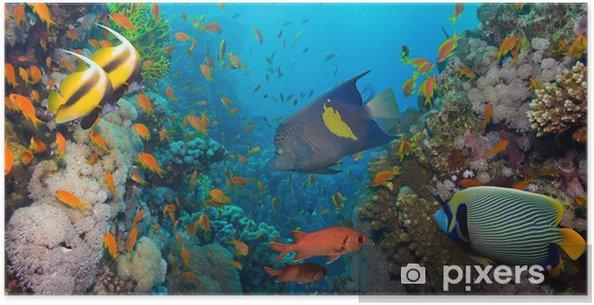 Plakat Koral i ryb - Tematy
